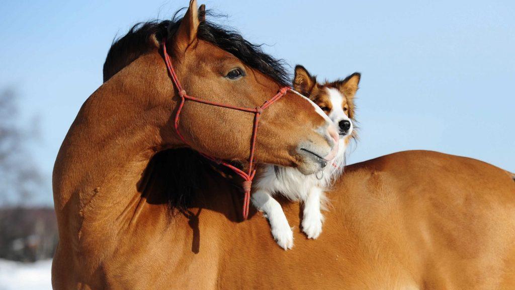 BANNER hevonen koira - häst hund - horse dog