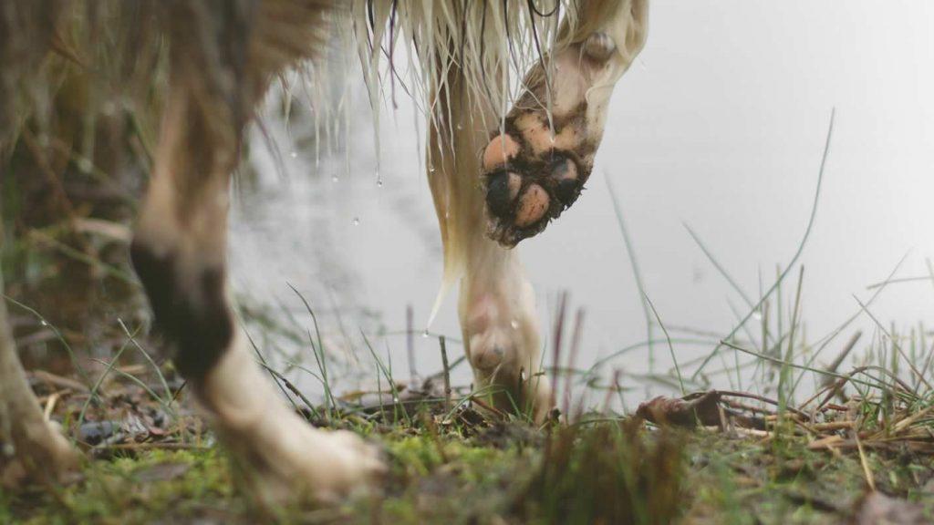 tassuhuolto 3 - tassvård 3 - paw care 3